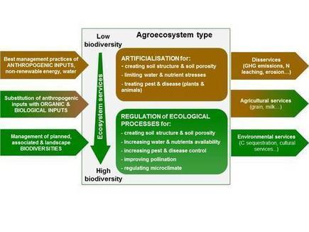 Une nouvelle publication de l'unité AGIR (AGroécologie, Innovations et TeRritoires) | Ecologie, Agro-écologie, Enseignement agricole | Scoop.it
