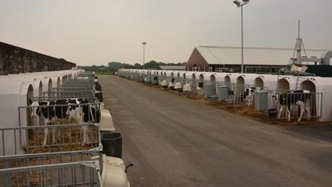 Exploitation laitière allemande - « J'ai plus de facilité à gérer 1.200 ... - Web-agri | BTPL | Scoop.it