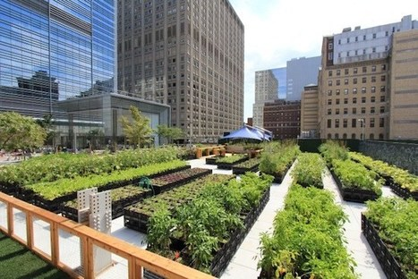 Manhattan Restaurant's Rooftop Farm Provides all the Fresh Ingredients it Needs | Wellington Aquaponics | Scoop.it