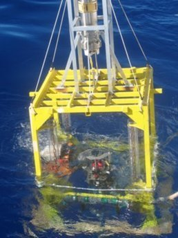 "Deepest ocean ""teems with microbes"" - ZME Science 