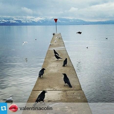 Via Instagram: Repost von @valentinacolin<br/><br/>Hungry guys | UnserBodensee | Scoop.it