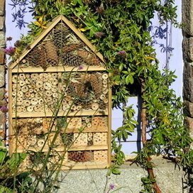 Create a deluxe insect hotel | Gardening Life | Scoop.it