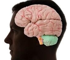 Mathematicians help to unlock brain function | Neuorplasticiy | Scoop.it