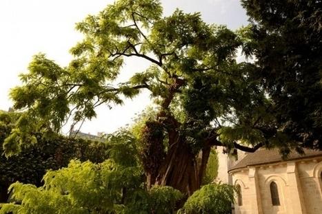 Open Data Paris : identifier les arbres de Paris   Efficycle   Scoop.it