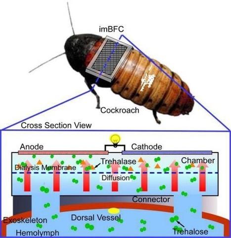 Des nouvelles des insectes : « On lui casse du sucre sur le dos» | EntomoNews | Scoop.it