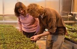 Team presents vegetable grafting findings in China - WSU News | Organic Farming | Scoop.it