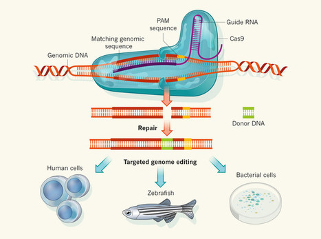 Biotechnology: Rewriting a genome | CRISPR-Cas ... | Multi- gene | Scoop.it
