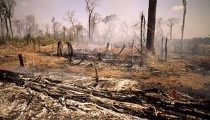 Pétition : L'huile de palme, un poison mortel ! | Environnement et DD | Scoop.it