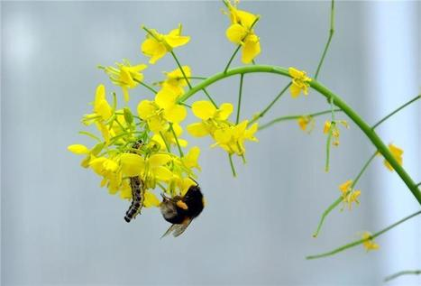 Using different scents to attract or repel insects - Phys.org | prehistoric plants | Scoop.it