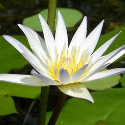 Meditation Can Make You Calmer, Kinder, Smarter   Online Business   Scoop.it