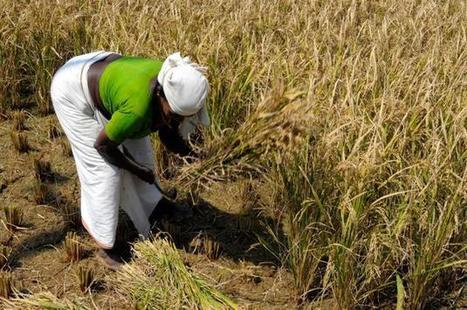India could face crippling heat waves | Food Security | Scoop.it