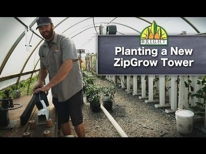 The 3 Types of Aquaponics Systems | Vertical Farm - Food Factory | Scoop.it