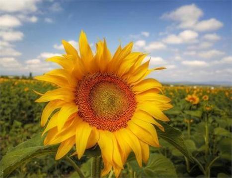 #Recomiendo #Empleo #Emprendedores: Sale de nuevo el sol | Sociedad 3.0 | Scoop.it
