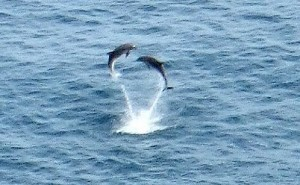 Jumping Dolphins in Ocean Beach | Earth Island Institute Philippines | Scoop.it