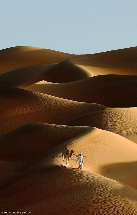 Desert Walk  por Shoayb Hesham | My Photo | Scoop.it