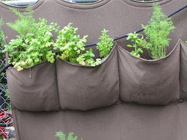 Creating The Demonstration Edible Garden Green Wall | Wellington Aquaponics | Scoop.it