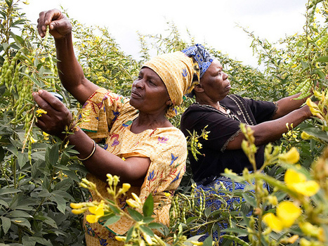 Free Trade Agreements Threaten Farmers' Rights, Food Security, Group Says | Questions de développement ... | Scoop.it