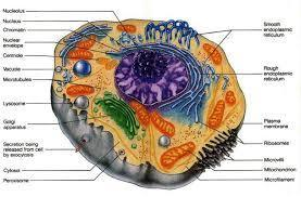 CELLS alive! Puzzles and games | Juliana's Biology E-toolbox | Scoop.it