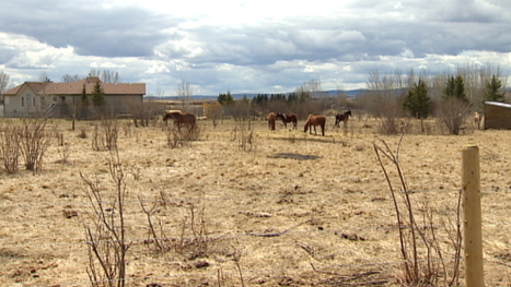 SPCA investigates animal rescue farm near Calgary - CBC.ca | Animals R Us | Scoop.it