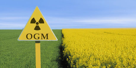 Le lobbying agressif de Washington pour les OGM | Bio alimentation | Scoop.it