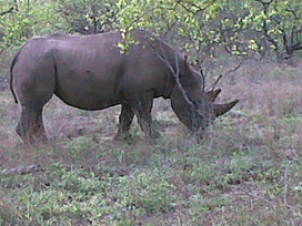 Kruger Park Sightings: It's hot... | Kruger & African Wildlife | Scoop.it
