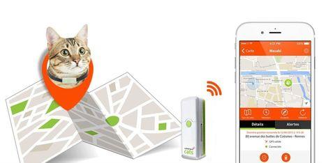 Weenect Cats, le collier GPS pour chat - Web des Objets | Gadgets Connectés | Scoop.it