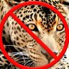 Wildlife Trafficking: Who Does it? Allows it?
