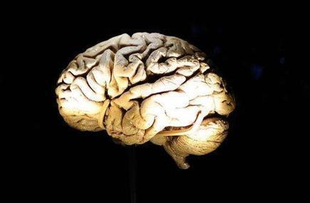 Le centre de la parole dans le cerveau n'est pas là où on le pensait   Aux origines   Scoop.it
