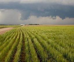Climate experts estimate risk of rapid crop slowdown   Sustain Our Earth   Scoop.it