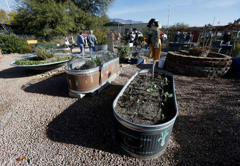 Log on and dig in: gardening lessons online | Arizona Daily Star | CALS in the News | Scoop.it