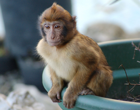 Don't Feed the Monkeys - Conservation Articles & Blogs - CJ | Wildlife and Conservation | Scoop.it