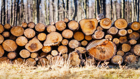 Is Asia-Pacific Timberland a Growth Sector? | Timberland Investment | Scoop.it