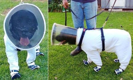 Bazz the beekeeping dog wears a special suit to protect it from stings | Interesting & Odd Pet Topics | Scoop.it