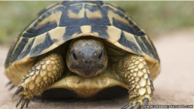 BBC Mundo – Noticias – Test de paternidad para tortugaspromiscuas | Agua | Scoop.it