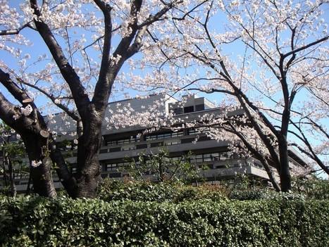 Au Japon, les bibliothèques publiques se portent bien   Quatrième lieu   Scoop.it