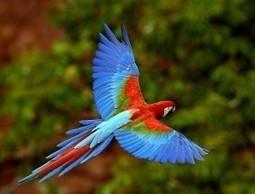 Travel Amazon Rain Forest - World's Most Bio-Diverse Area - Trip Logo   Travel Exotics of the world   Scoop.it