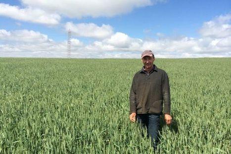 SA farmers need rain to finish off the grain season   Beet western yellows virus   Scoop.it