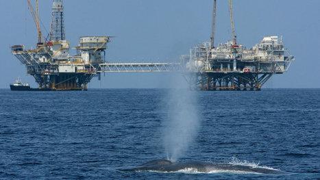 U.S. Moves Toward Atlantic Oil Exploration, Stirring Debate Over Sea Life   Sustainable Futures   Scoop.it