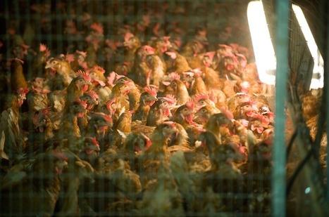 """Agriculture : """"On fabrique des fermes de merde, littéralement""""   Environnement et développement durable, mode de vie soutenable   Scoop.it"""