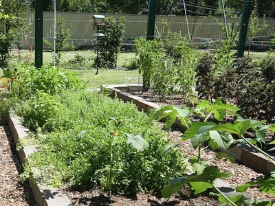 7 No-Cost Ways to Grow More Food From Your Garden | MSuttonPermaculture | Scoop.it