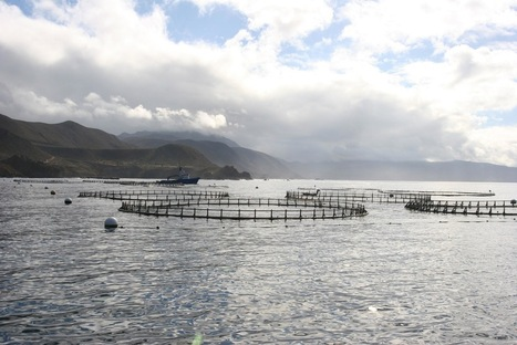NOAA report bullish on marine aquaculture | Viet Linh | Scoop.it