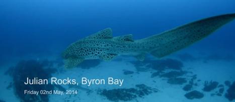 Bayzrr Byron Bay Culture News | Tweed Coast Marketing News | Scoop.it