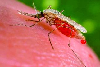 El Ménéa : 3 cas de paludisme importé détectés - El Watan | Institut Pasteur de Tunis-معهد باستور تونس | Scoop.it