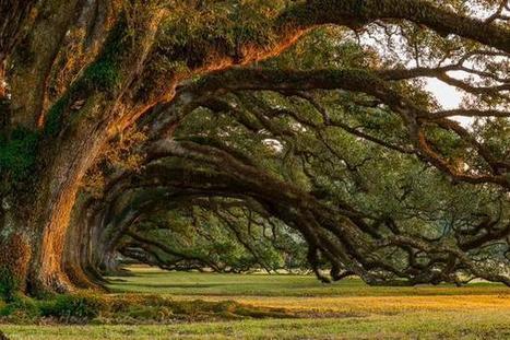 Missederve on Twitter | Oak Alley Plantation: Things to see! | Scoop.it