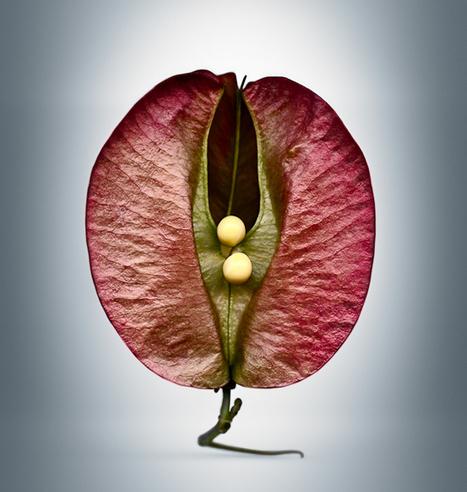 La fascinante belleza de las semillas (micro-modelos de reproducción cósmica) | Arte y Cultura en circulación | Scoop.it