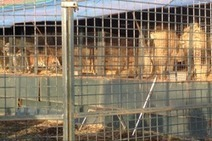 Continued Concerns for Chipperfield Big Cats | Animal welfare | Scoop.it