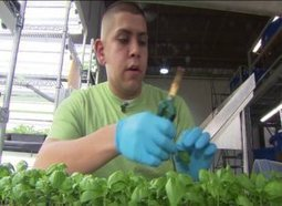 Urban Farm Jobs | CLTV | Vertical Farm - Food Factory | Scoop.it