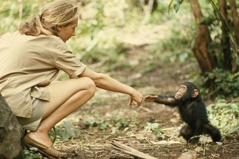Is #China Colonizing #Africa? Jane Goodall Thinks So | Great articles to share ! | Scoop.it