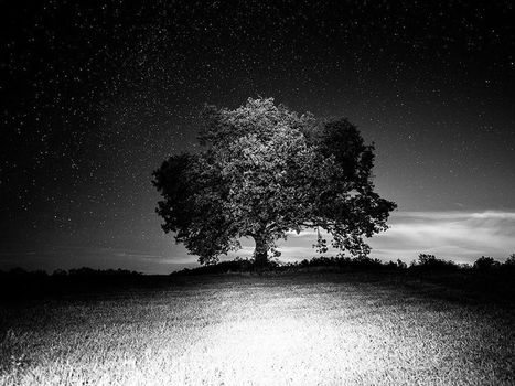Tree Image, Italy |National Geographic Photo of the Day | Sustainable Forestry | Scoop.it