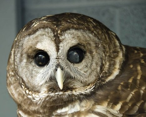 Owls at Ijams, GO! dancers, living history among upcoming family-friendly things to do | Tennessee Libraries | Scoop.it